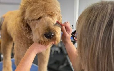 Coat care for your Oodle