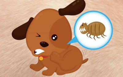 Fleas – What you need to know